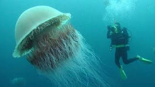 15 BIGGEST Animals You Won't Believe Actually Exist!!