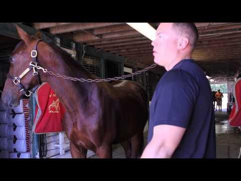 Horse Racing raw