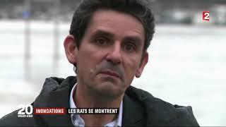 Inondations les rats se font plus visibles à Paris