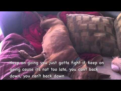 Pit Bull's Don't Cry Song