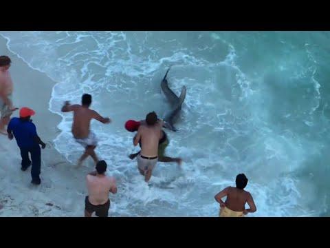 SHARK ATTACK! REAL Hammerhead Shark On the BEACH!