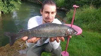 Äschen Eskalation beim Barben angeln