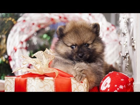 Getting a Puppy for Christmas Compilation Part 2