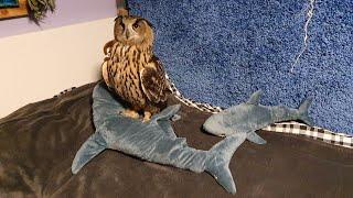 Сова на акуле бороздит бескрайние просторы кроватки thumbnail