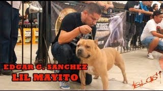 IBKC CHAMPEON COMPETITION  HOSTED BY PANCHITO 2013 AMERICAN BULLY SHOW EVENT
