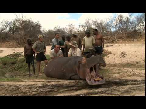 Hunting Safari in Tanzania HD video