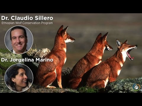 Ethiopian Wolf Conservation Program · Dr. Claudio Sillero & Dr. Jorgelina Marino · Expo 2014