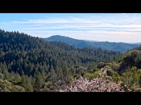 9550 Saint Helena Rd || Prosper Real Estate