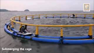 Aquatec Offshore Submersible Cage in Situbondo, East Java, Indonesia