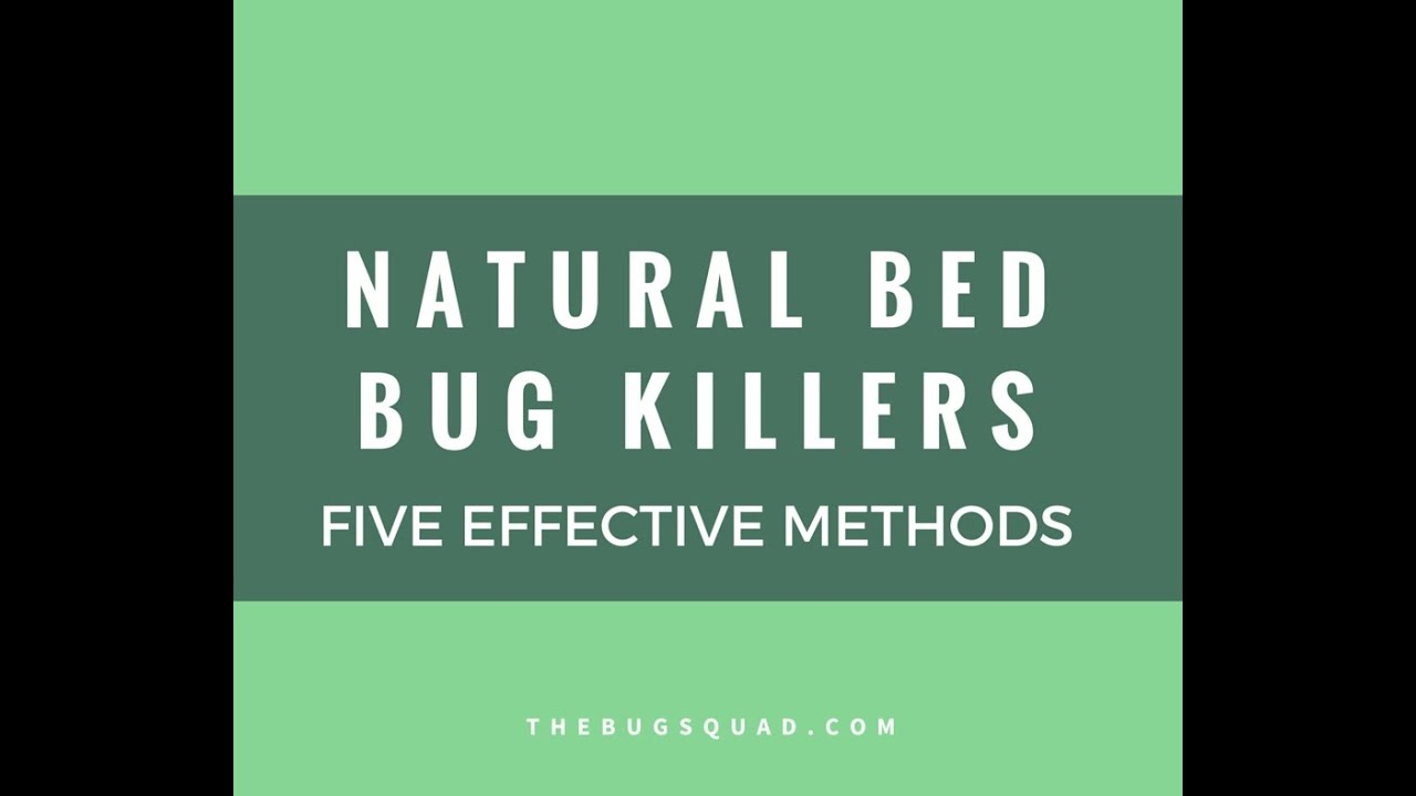 Easy Steps to Get Rid of Bed Bugs Permanently (Video Included)