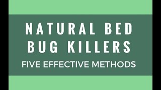 Five Natural Bed Bug Killers That Work? [The Bug Squad]