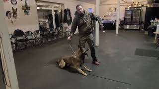 Dog Training the DIRTY PROCESS