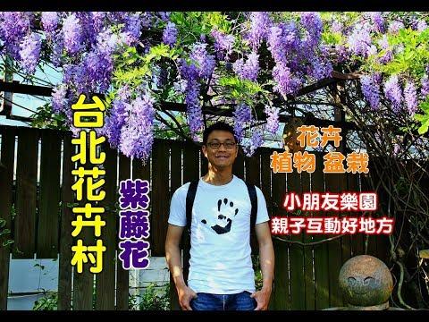 [台北士林紫藤花] 台北花卉村紫藤花浪漫上映!還有許多花卉盆栽以及也是小朋友樂園