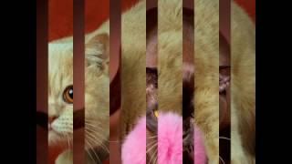 Клип коты- Имя любимое моё