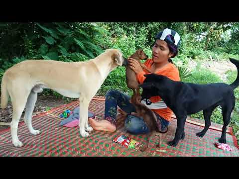 Wow Amazing Beautiful Girl Playing With Dog   Smart & Funny Dog cat Part39