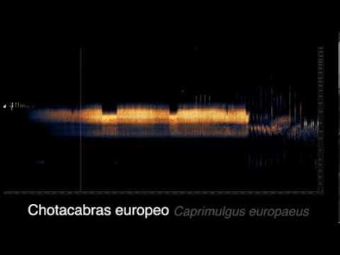 Las voces de la noche. Programa Noctua ©carlosdehita.es