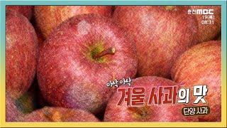 [전국시대] 아삭 아삭 겨울 사과의 맛