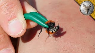 stung-by-a-velvet-ant