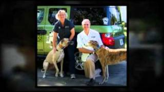 Home Dog Training - Bark Busters