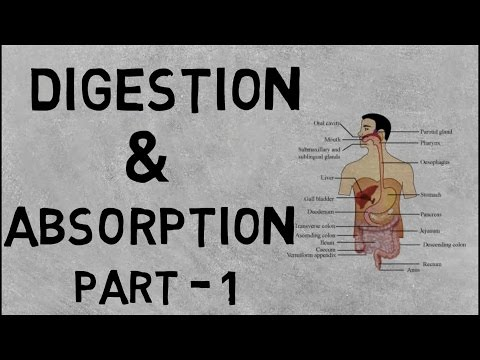 Digestion And Absorption Part 1- Learn Full NCERT (Mouth} Class 11