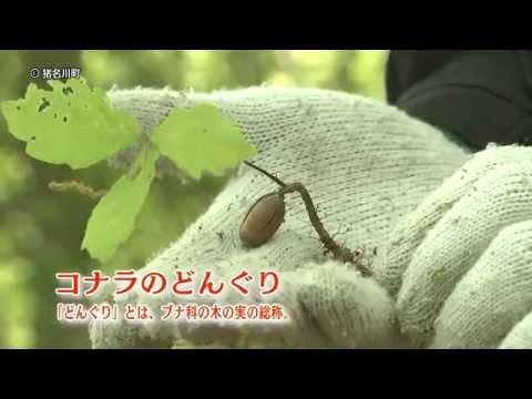 猪名川町の里山・内馬場の森は、若葉きらめく絶好の季節。 さあ、豊かな自然と会いに内馬場の森へ出かけましょう.