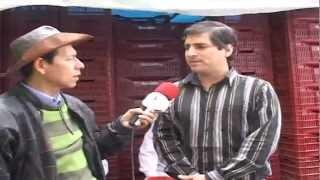 AGUAYMANTO: PRINCIPAL EXPORTADOR DE CAJAMARCA  A EUROPA