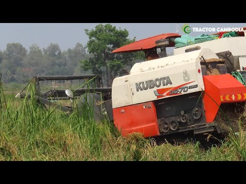Awesome Modern Technology Agriculture Equipment Machine | Rice Harvester at Paddy Rice Field & Muddy