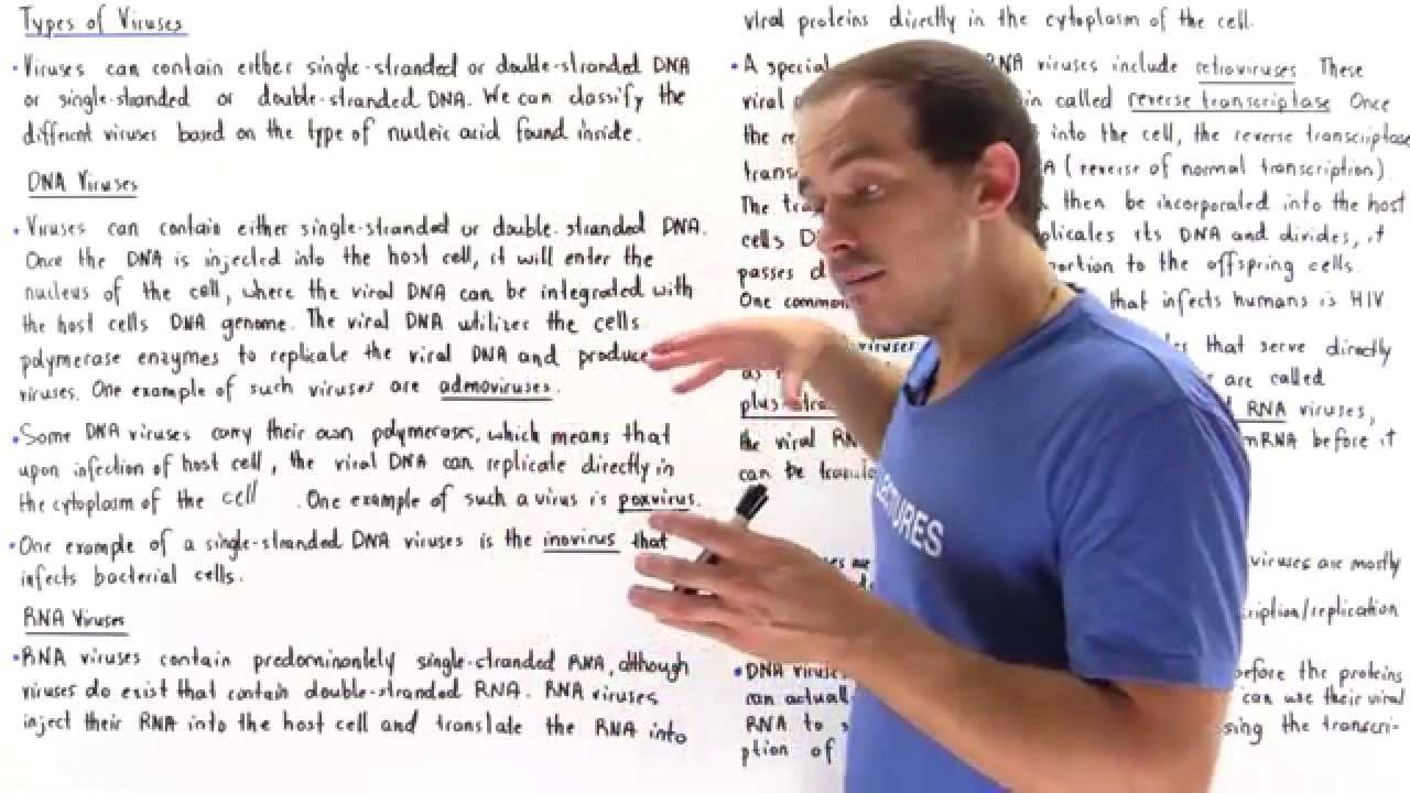 rna and dna viruses youtube 3 Types of RNA Molecules rna and dna viruses