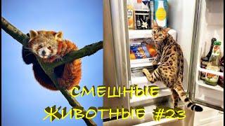 Смешные КОТЫ СОБАКИ ЕНОТЫ ПОПУГАИ 23 Ржачные животные 2021