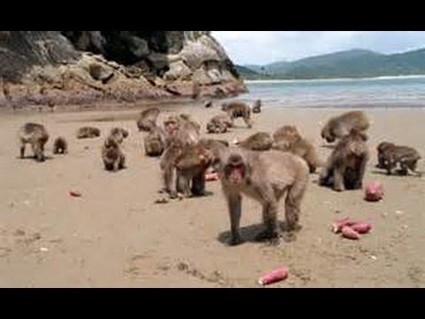 The Hundredth Monkey Effect and a Worldwide Political Awakening...