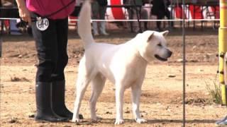 日本犬全国展覧会DVD112回ダイジェスト映像 詳細は下記URLをご参照くだ...