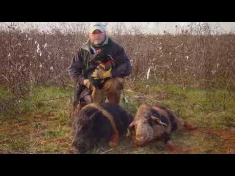 Hog Hunting with Jagd Terriers and Curs ( Volume #1 )
