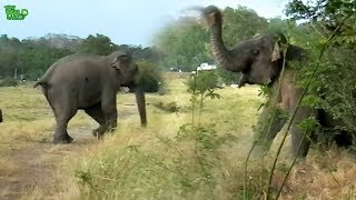 Adventurous elephant sent back to his home after treatments