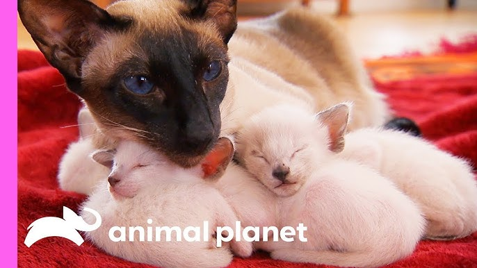 Animal Planet - YouTube on