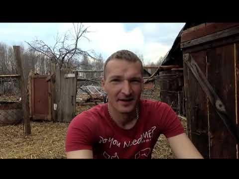 84 Отрок Вячеслав, нашествие красных муравьев