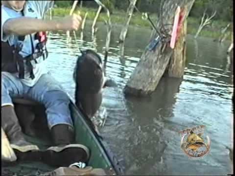 Boat Full Of Kansas Flathead Catfish Caught On The TOPCAT