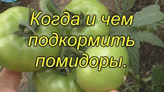 Подкормка томатов, которая [значительно] повысит урожай. Когда и чем подкормить помидоры.
