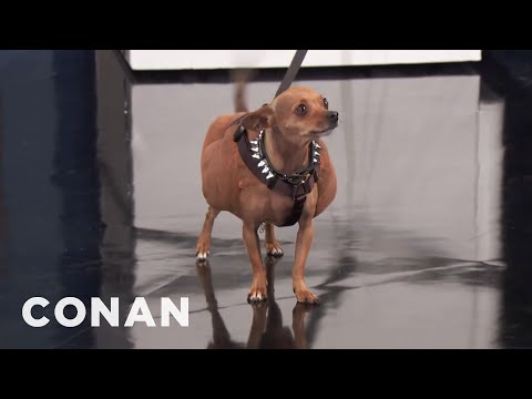 "Dwayne ""The Dog"" Johnson Is The New Buff Cat  - CONAN on TBS"
