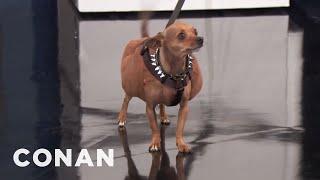 "Dwayne ""The Dog"" Johnson Is The New Buff Cat  - CONAN on TBS"