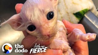 Tiny Sick Kitten Grows Up To Be Huge And Fluffy | The Dodo Little But Fierce