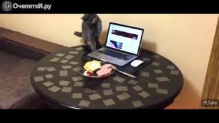 Как надо отучать кота лазить по столу
