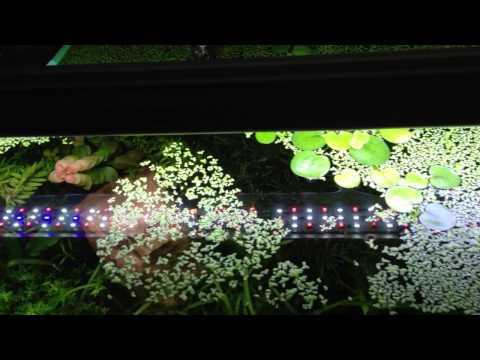 Pros And Cons Of Floating Plants