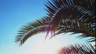 Palm leaves against the blue sky. Free stock video. Full HD footage Free. Rec.709 1080p 60fps #19