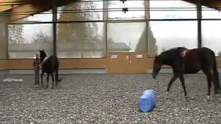 Parelli Horse Training with Multiple Horses - Mira, Cosmic & Gerolina