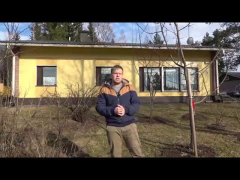 знакомства с финскими женихами