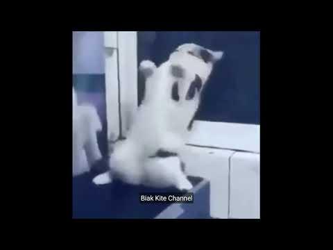 salah-apa-diriku-padamu,-kucing-lucu