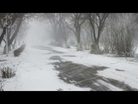 🎧 Winter Storm Sound - 8 Hours Of Ambient Snowstorm, Blizzard Sounds, Heavy Wind For Relaxation