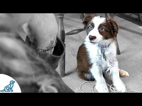 Teaching Your Puppy To Listen To You - Puppy Training Secrets