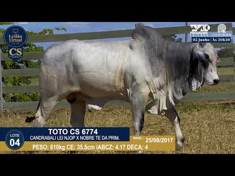 LOTE 04