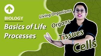 Class 10 Biology : Life Process   Basics of Life Processes